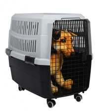 Favorite Airline Kennel Pet Carrier, Grey,XL
